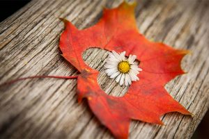love_leaf_flower